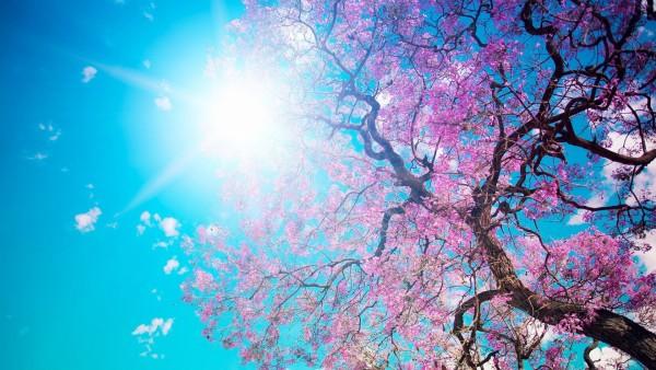 wholehappiness-sunshine